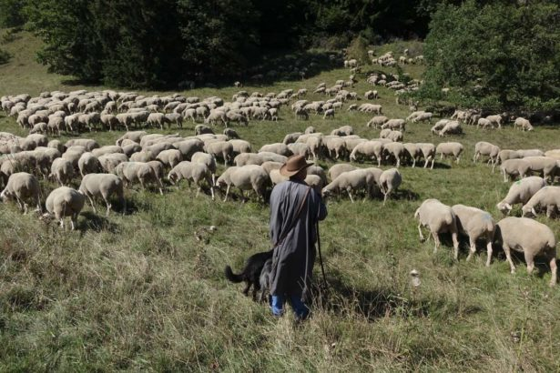 公視_農村的遠見_第二季_德國施瓦本山谷