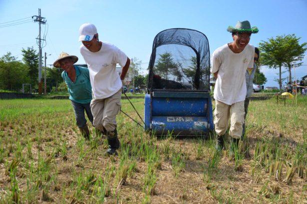 在相招來作田,吃到自己種的米的號召下,一群嚮往農村生活的穀東們年年相聚田畔...