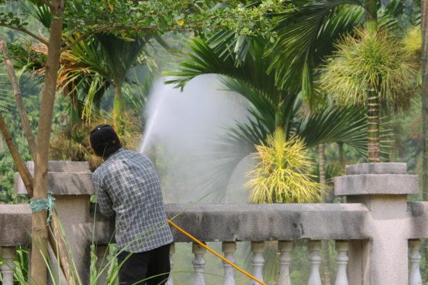 檳榔噴藥方式易對周邊生態環境造成影響(上下游資料照)