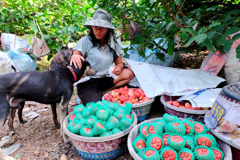 張靜玉收留多隻流浪狗,也是她減少化學農藥而改採生態防治的原因(攝影_蔡佳珊)