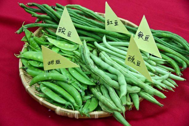 檢測不合格的甜豆、豌豆、醜豆、敏豆、豇豆(攝影_林怡均)