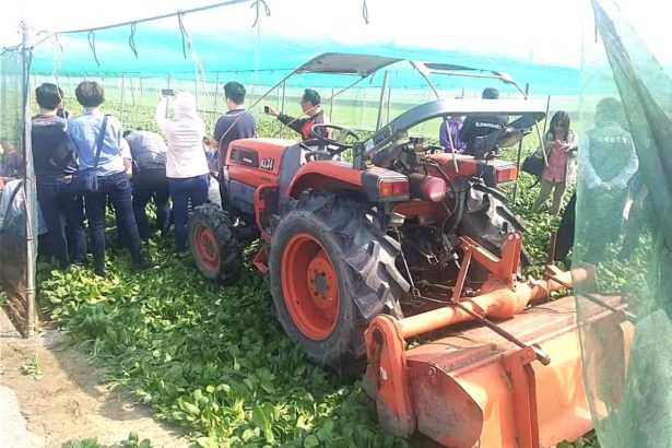 3月7日已有農民開始耕鋤小葉菜(照片來源_台灣農業監督團隊粉絲專頁)