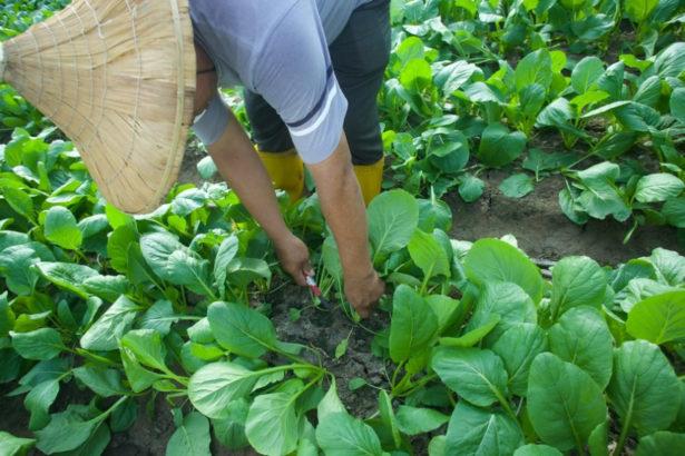 【公民寫手】氣候變了 蔬果的家去哪?