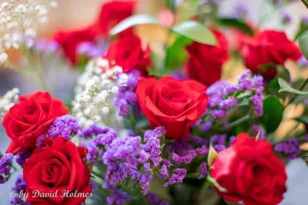 花卉拍賣市場直擊,爭奇鬥艷的時尚秀場!恐慌蔓延時,正是百花奔放季節