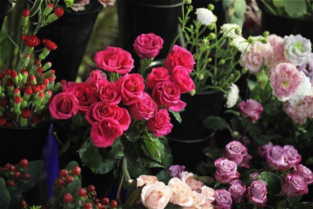 現為國產花卉最多的季節(攝影/林怡均)
