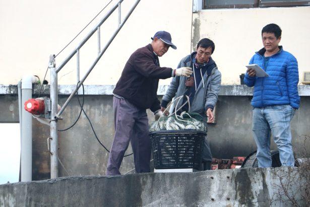 台灣每年進口近3萬噸鮭魚鱈魚,台灣好魚卻得仰賴銷中?佳冬漁二代要翻轉未來