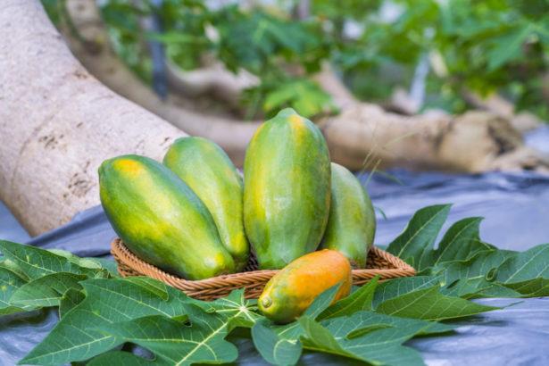 【公民寫手】有機木瓜 向大自然爭取來的美好滋味