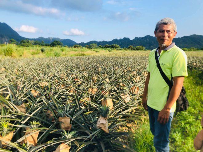 鹿野鄉龍田村農友李萬枝 鳳梨人生四十年「我不是專家,還在嘗試」