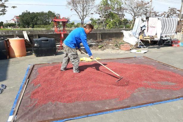 從父親手上接棒,蕭成龍已經種了六年紅豆,都是以非除草劑的方式採收,也都以天然日曬方式曬紅豆(圖片提供/蕭成龍)