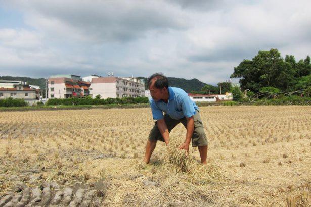 田守喜的農地被徵收兩次了,他目前租六甲地,也是在璞玉計畫的徵收範圍內,他隨時可能失業。 拍攝/楊鎮宇