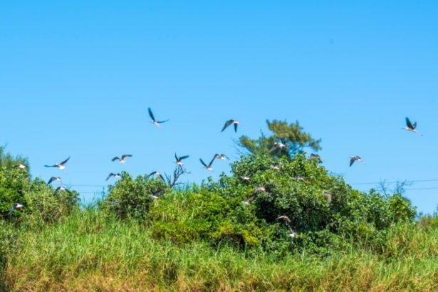 【公民寫手】動物好・土地好・ 人也好 共創永續生態