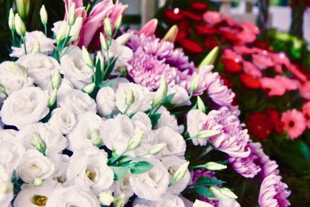 花卉產業30年總檢討,品種研發、外銷拓展、內銷斷層待解,切花盆花需增通路