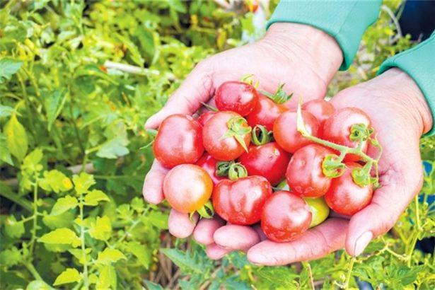 怎麼看待有機農產品?