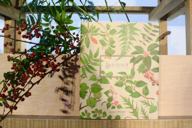 整座森林就是鄒族的圖書館!翻開《鄒的植物書》,走進人與植物共構記憶庫