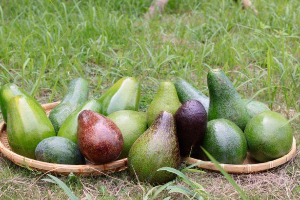 台灣酪梨品種繁多,且愈來愈受消費者青睞。(攝影/楊語芸)