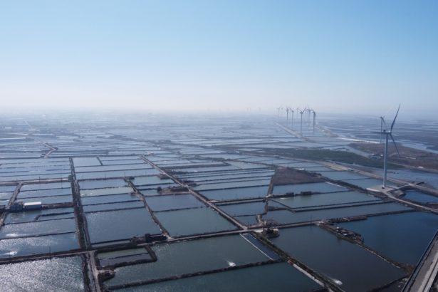 彰化海岸線面臨退化與生態課題,若再修法對光電設施網開一面,最後一道海岸保護的力量將弱。(彰化環盟提供)
