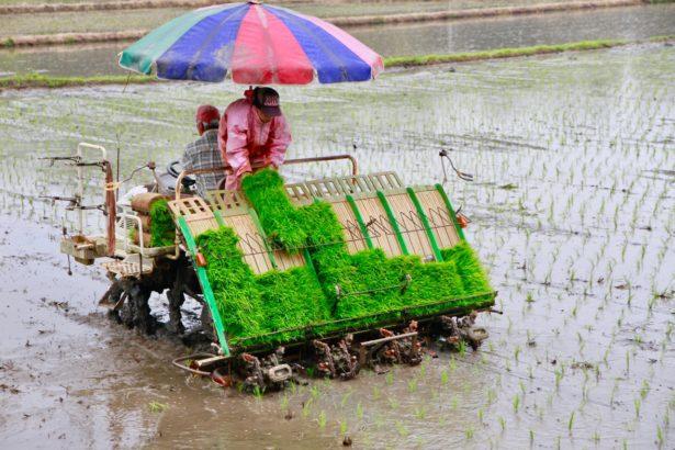 水稻休耕不只影響農民,育苗和代耕整個產銷鏈都受影響(攝影/林怡均)