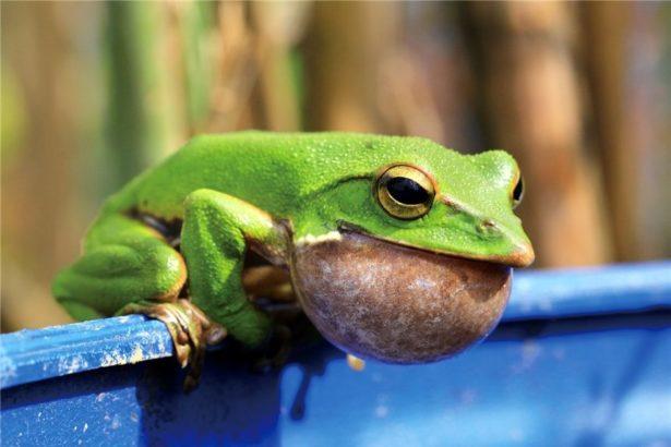 【公民寫手】【綠色保育】用有機茶守護水源地與翡翠樹蛙
