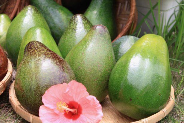 酪梨近年來是最夯的減肥養生聖品(攝影/楊語芸)