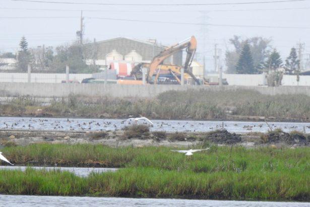 成龍濕地周邊草澤區活動的候鳥與開發中的爭議地點。(王昭湄提供)