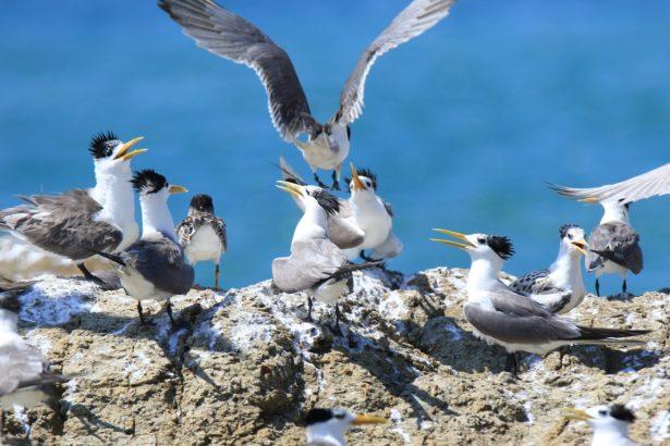 台灣的鳥過得好不好?台灣首發表《國家鳥類報告》,820萬筆資料鳥況全揭露