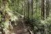 台灣林業的未來想像 ─Part 1:日本的林業生活與自伐型林業