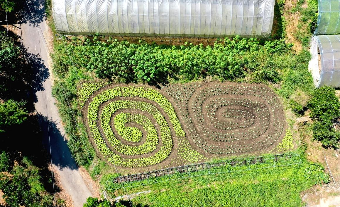 BD農夫巫建旺認為,螺旋狀高麗菜可以提醒他宇宙運行的力量。(胡耿逢提供)