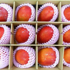 送禮用的包裝,一般外銷芒果會全包覆,避免暴露在空氣中影響新鮮度2(劉姓貿易商提供)