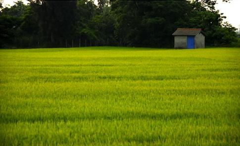 打開知覺,細細體會台灣的田園之美