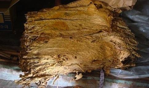夏耘農村草根訪調系列一:美濃菸葉(3)