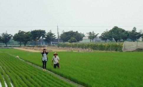 甘厝村:記憶中的那片草綠色