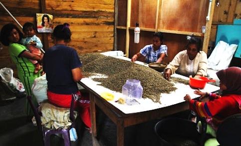 田野筆記:走進印尼的咖啡貿易