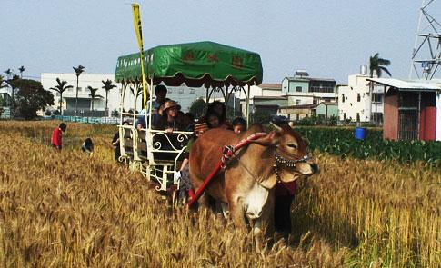 「麥」擱來啊:台灣近代小麥栽植史