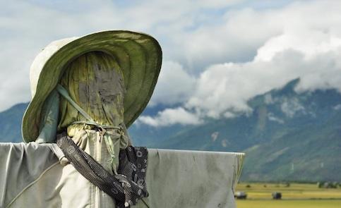 從農之路: 我的尋根之旅--進入社會
