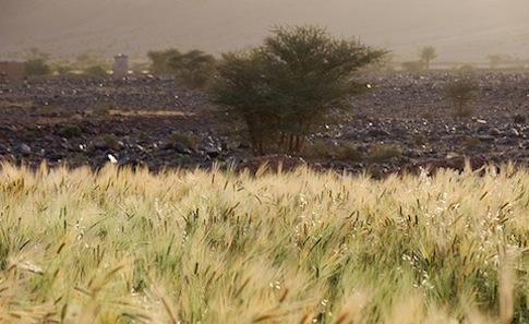 海外搶地種糧,為當地生態民生帶來危機