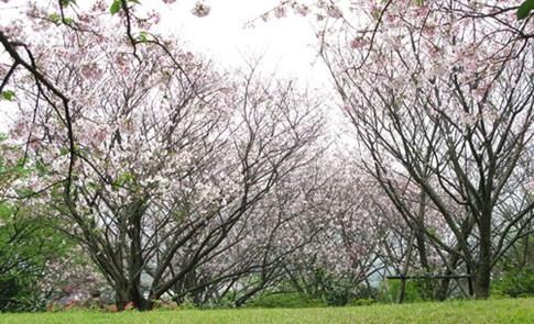 有情大樹,柔軟我心--誰有權力砍樹!?
