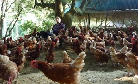 動物有福利,人類有福氣!善待雞,才有好蛋!