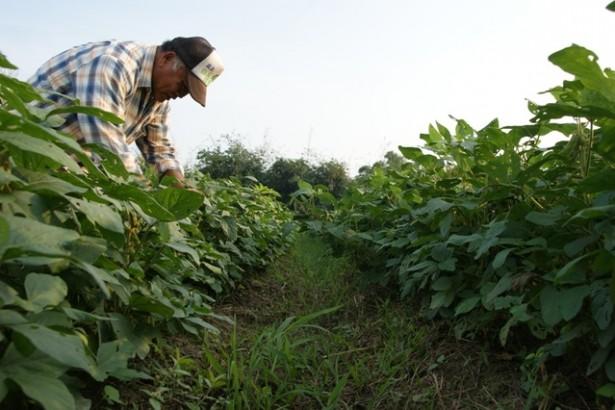 楊儒門產地之旅(3)潤惠農場的生命力