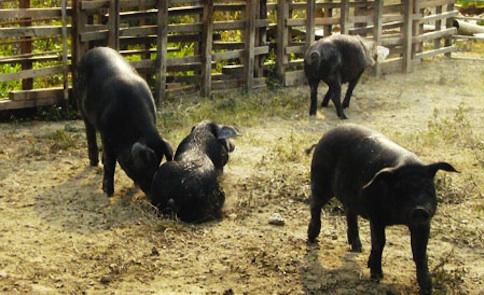 窮鄉僻壤的好滋味:田寮肉食文化