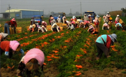 改革扭曲的農業政策,從老農津貼談起