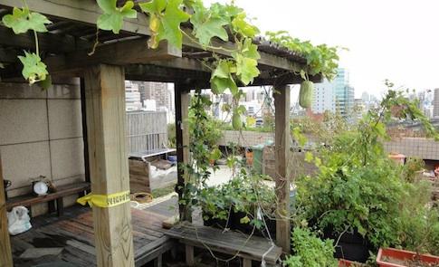 綠辦公室:打造屋頂菜園、雨水回收