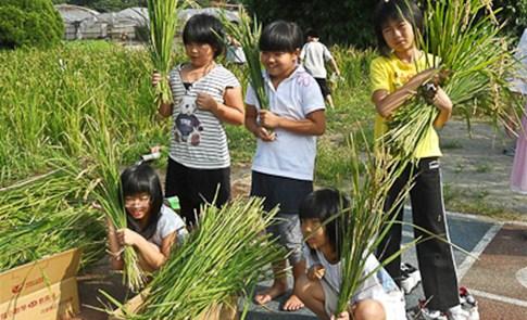 在田裡的一堂課:校園耕作.連線報導