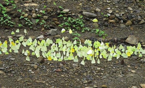 溪谷,巨石,黃蝶:鍾理和筆下的水底坪
