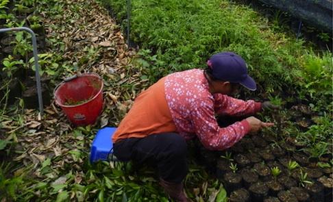 農民保種:種出一個小農經濟的未來