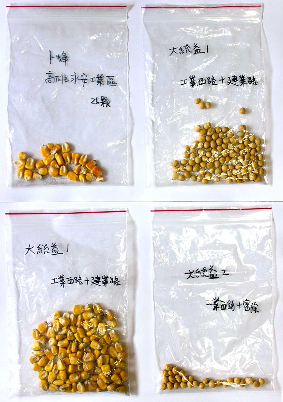 上下游記者撿到的黃豆及玉米種籽