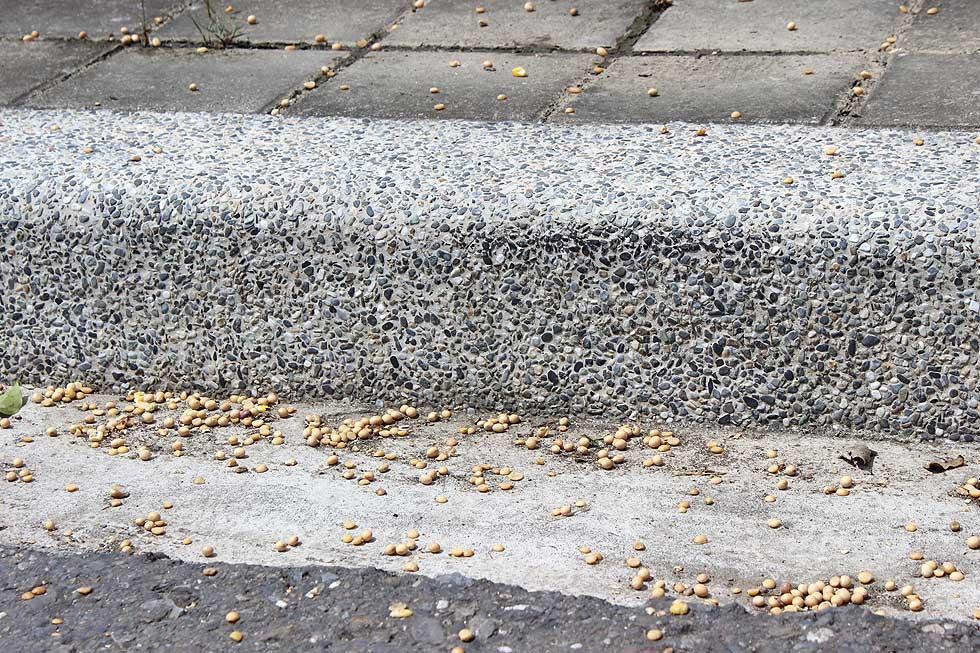 路上遍佈基改黃豆