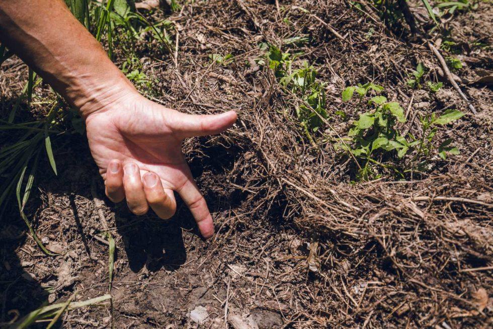 草生栽培果園的土壤,有機質豐厚(攝影/ 連偉志)