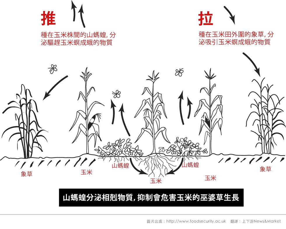 striga-diagram-980-r