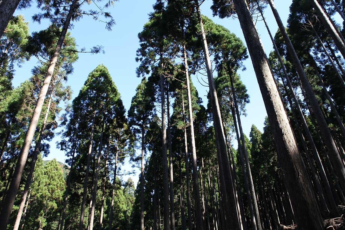 西粟倉村森林。攝影 / Alittle