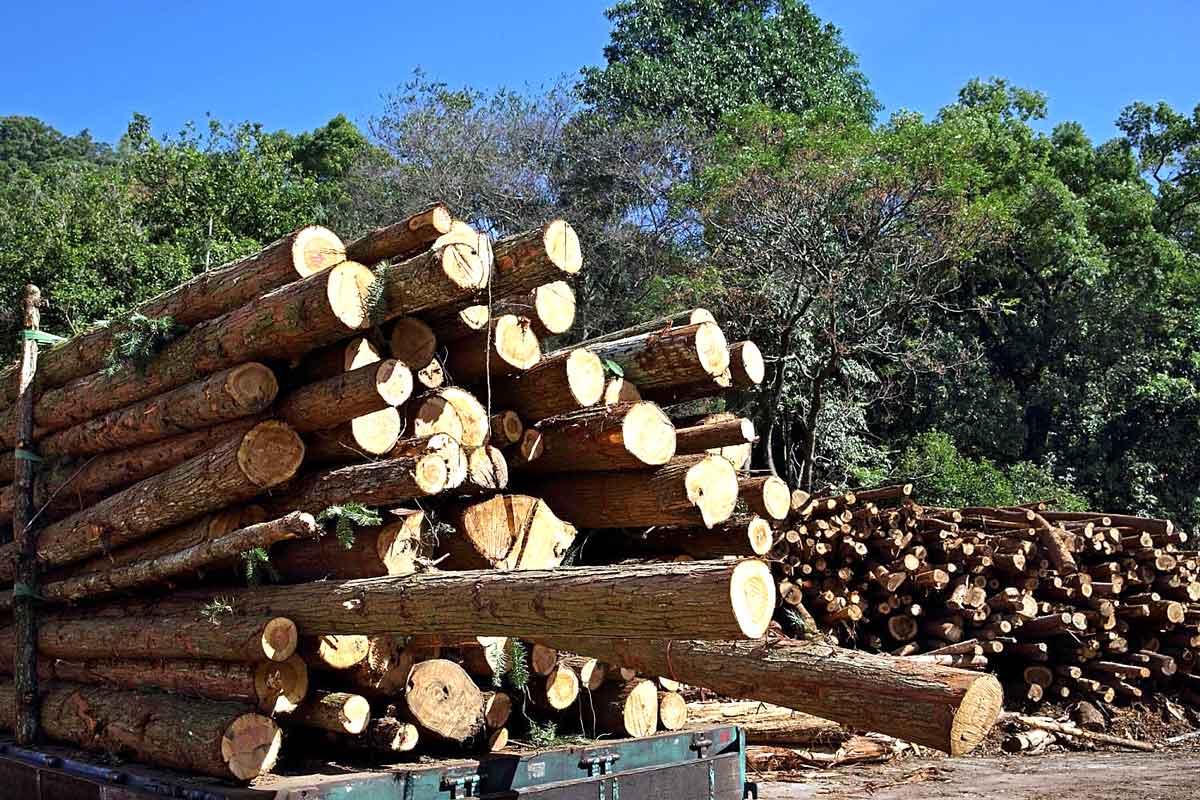 自林班地收穫而來的原木,以卡車運至台大實驗林的木材加工廠。